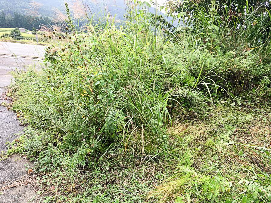 jiji170927-8_りんご直売所周辺の草刈り