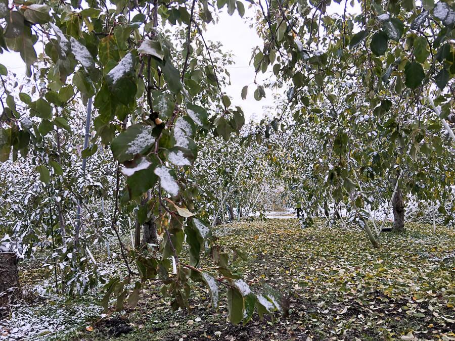 j_171120-24_雪降りましたー